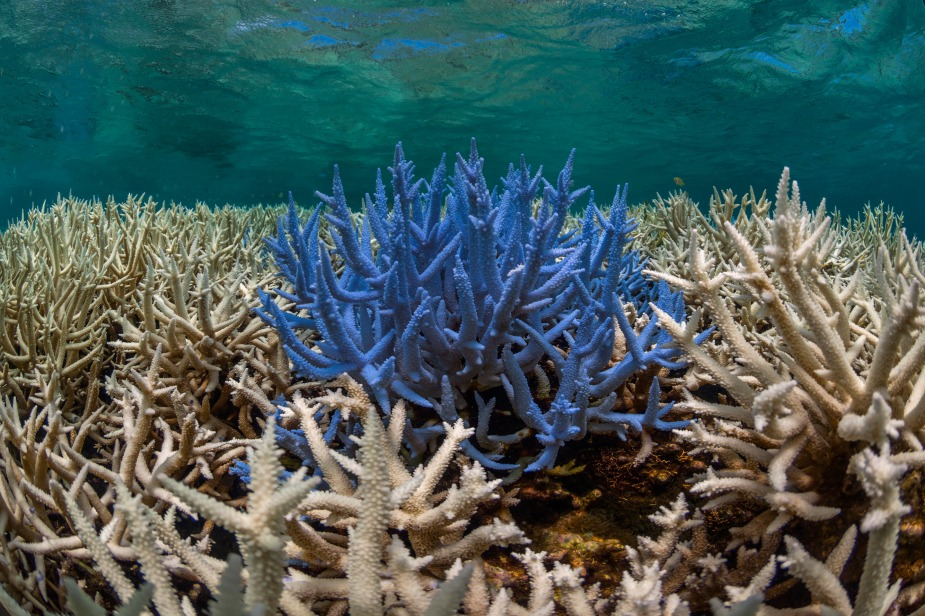 11-Coral-bleaching-in-New-Caledonia.jpeg