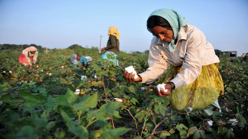 icac-urges-cotton-producers-to-adapt-and-innovate-4288a704583a04ff2d5002752fe777f5.JPG