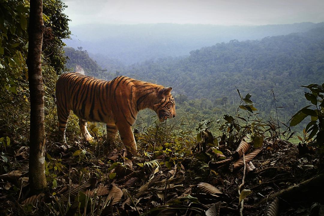 bbs_04b_ne_cam_12-tiger-lookout-ek000046.jpg