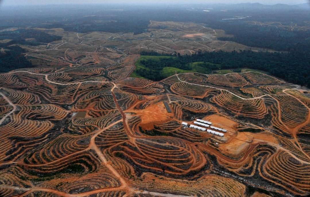 borneo-deforestation-palm-oil.jpg