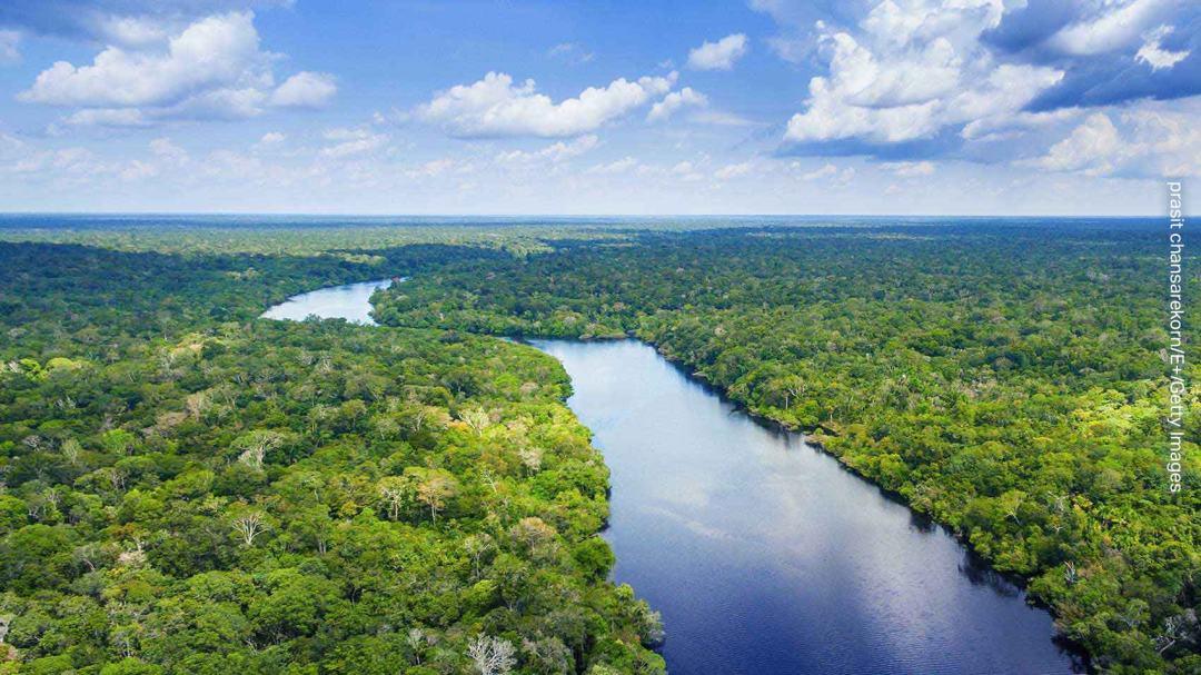 SCJohnson-Rainforest-Conservation_.jpg